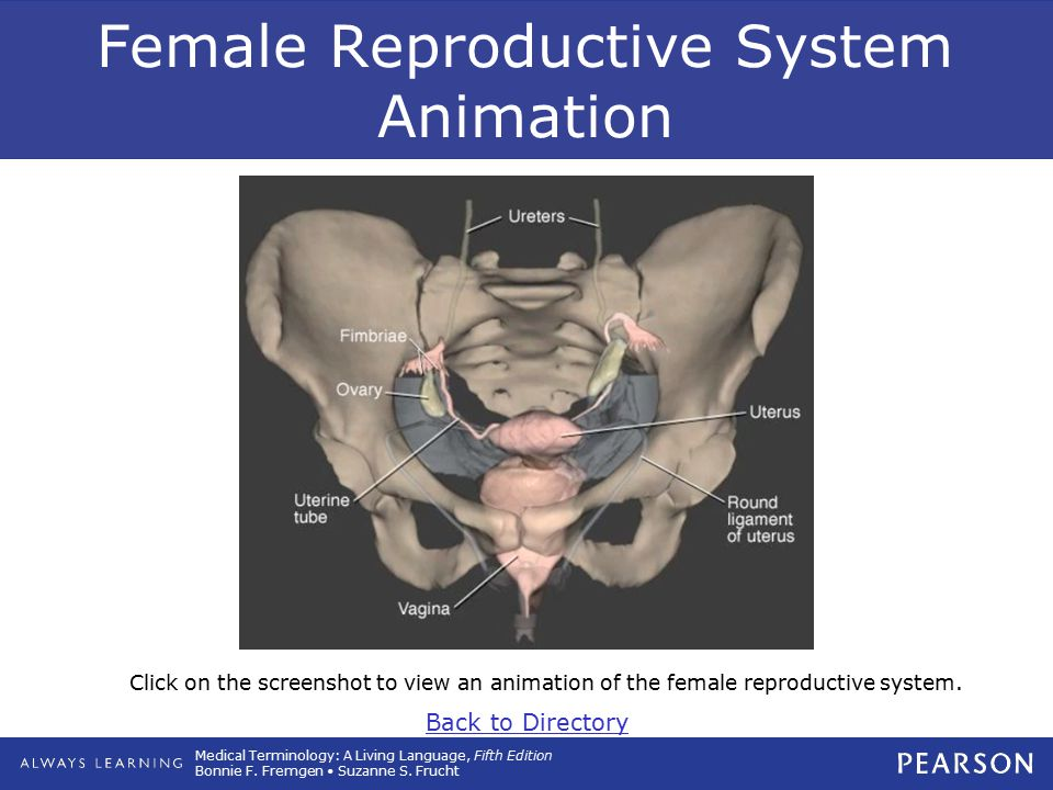 Medical Terminology: A Living Language, Fifth Edition Bonnie F. Fremgen Suzanne S. Frucht Female Reproductive System Animation Click on the screenshot