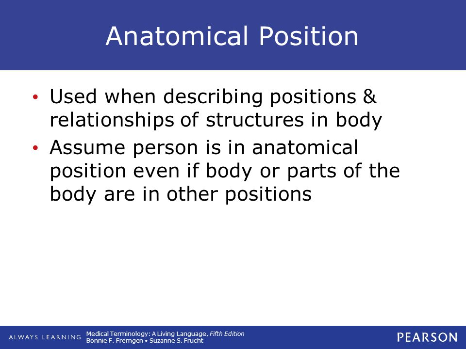 Medical Terminology: A Living Language, Fifth Edition Bonnie F. Fremgen Suzanne S. Frucht Anatomical Position Used when describing positions & relatio