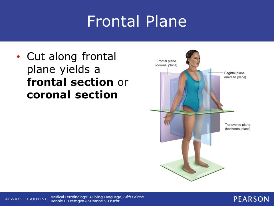 Medical Terminology: A Living Language, Fifth Edition Bonnie F. Fremgen Suzanne S. Frucht Frontal Plane Cut along frontal plane yields a frontal secti