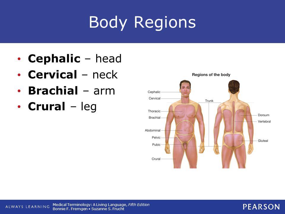Medical Terminology: A Living Language, Fifth Edition Bonnie F. Fremgen Suzanne S. Frucht Body Regions Cephalic – head Cervical – neck Brachial – arm