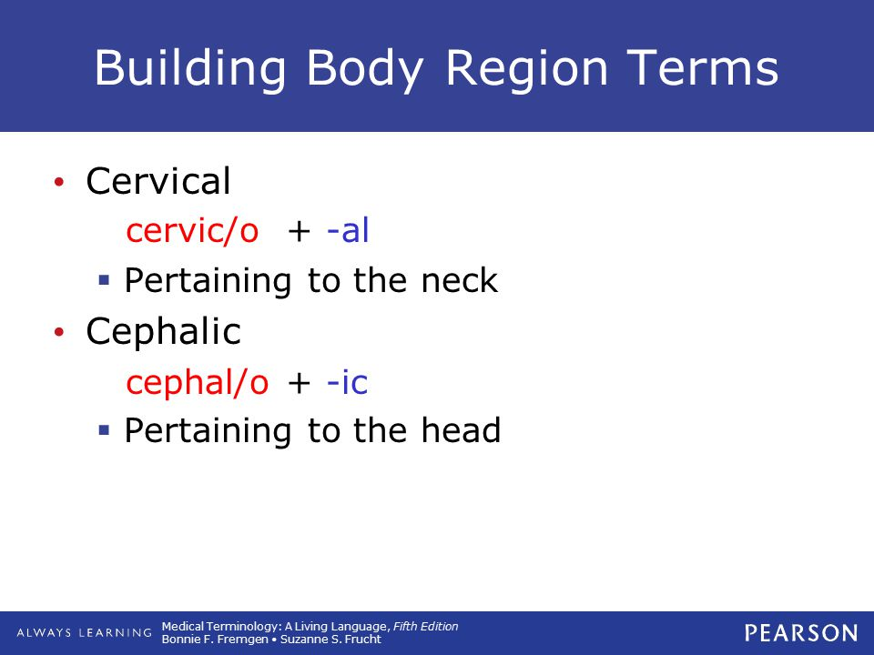 Medical Terminology: A Living Language, Fifth Edition Bonnie F. Fremgen Suzanne S. Frucht Building Body Region Terms Cervical  Pertaining to the neck