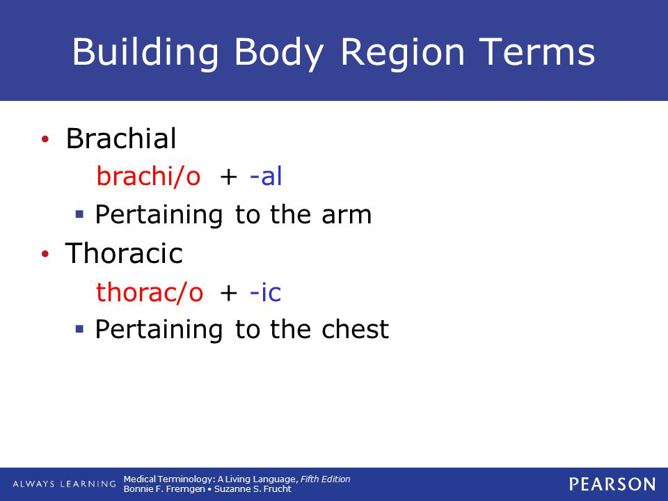 Medical Terminology: A Living Language, Fifth Edition Bonnie F. Fremgen Suzanne S. Frucht Building Body Region Terms Brachial  Pertaining to the arm