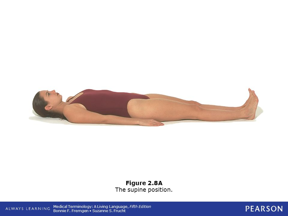 Medical Terminology: A Living Language, Fifth Edition Bonnie F. Fremgen Suzanne S. Frucht Figure 2.8A The supine position.