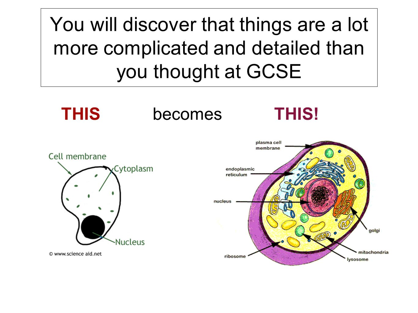 4 You will discover that things are a lot more complicated and detailed  than you thought at GCSE THISbecomesTHIS!