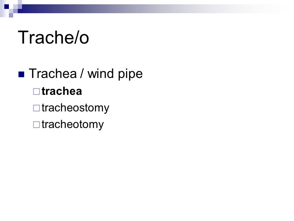 Trache/o Trachea / wind pipe  trachea  tracheostomy  tracheotomy