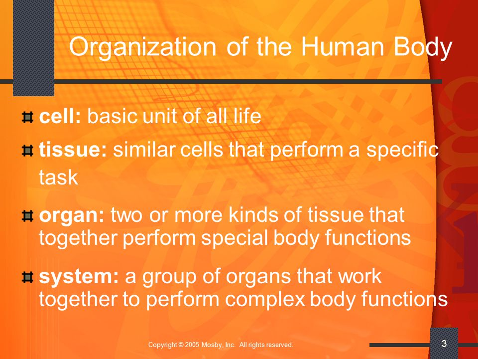 Copyright © 2005 Mosby, Inc. All rights reserved. 3 Organization of the Human Body cell: basic unit of all life tissue: similar cells that perform a s