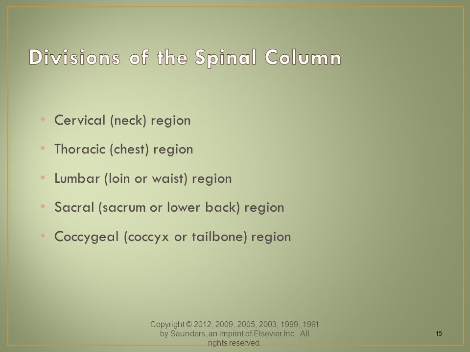 Cervical (neck) region Thoracic (chest) region Lumbar (loin or waist) region Sacral (sacrum or lower back) region Coccygeal (coccyx or tailbone) region Copyright © 2012, 2009, 2005, 2003, 1999, 1991 by Saunders, an imprint of Elsevier Inc.