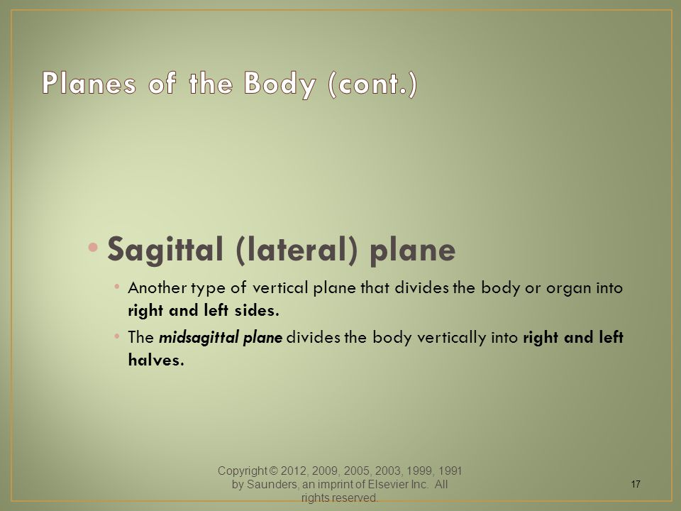 Sagittal (lateral) plane Another type of vertical plane that divides the body or organ into right and left sides.