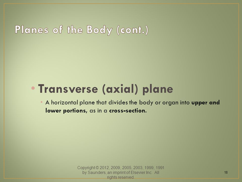 Transverse (axial) plane A horizontal plane that divides the body or organ into upper and lower portions, as in a cross-section.