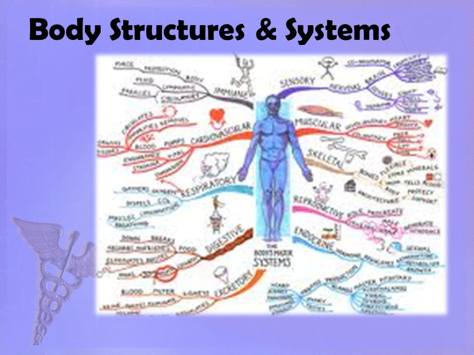 Body Structures & Systems