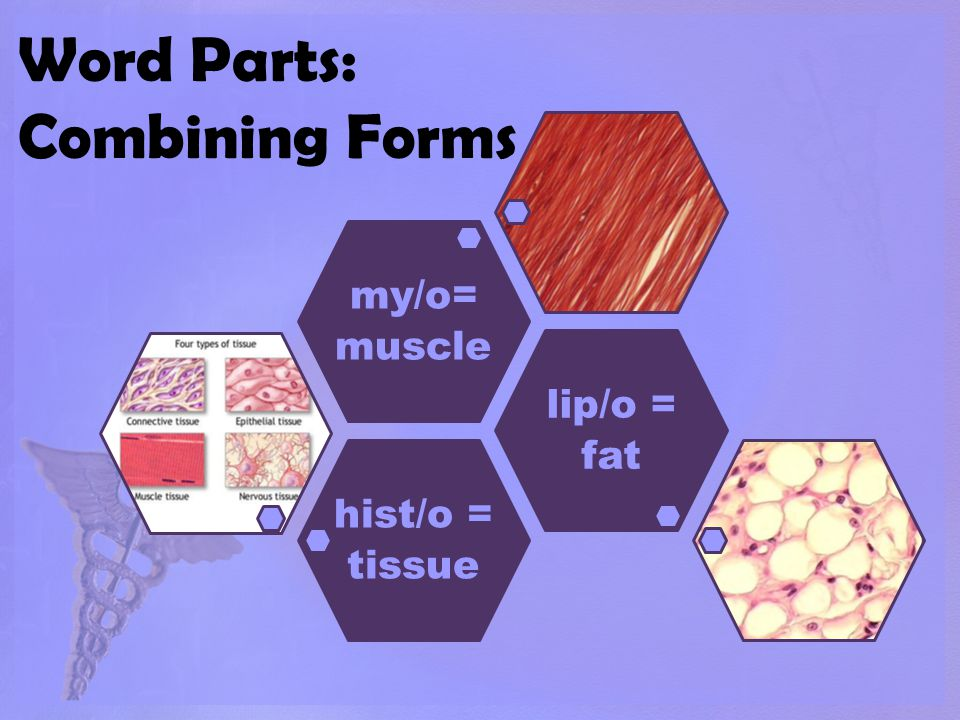 Word Parts: Combining Forms hist/o = tissue lip/o = fat my/o= muscle