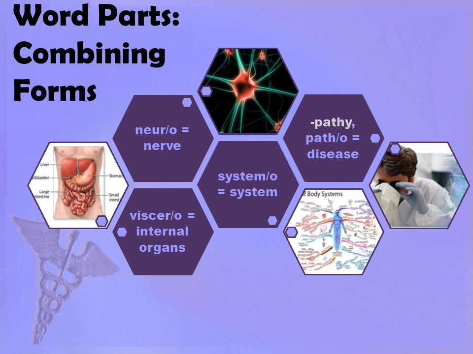 Word Parts: Combining Forms viscer/o = internal organs system/o = system neur/o = nerve -pathy, path/o = disease