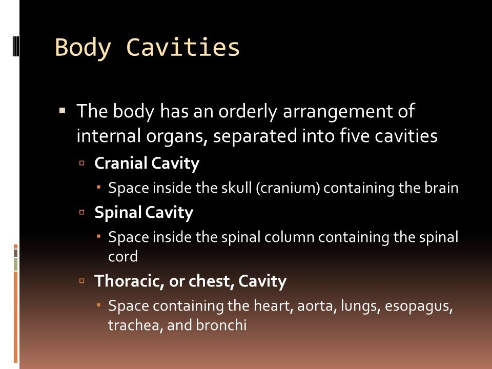 Body Cavities  The body has an orderly arrangement of internal organs, separated into five cavities  Cranial Cavity  Space inside the skull (cranium) containing the brain  Spinal Cavity  Space inside the spinal column containing the spinal cord  Thoracic, or chest, Cavity  Space containing the heart, aorta, lungs, esopagus, trachea, and bronchi