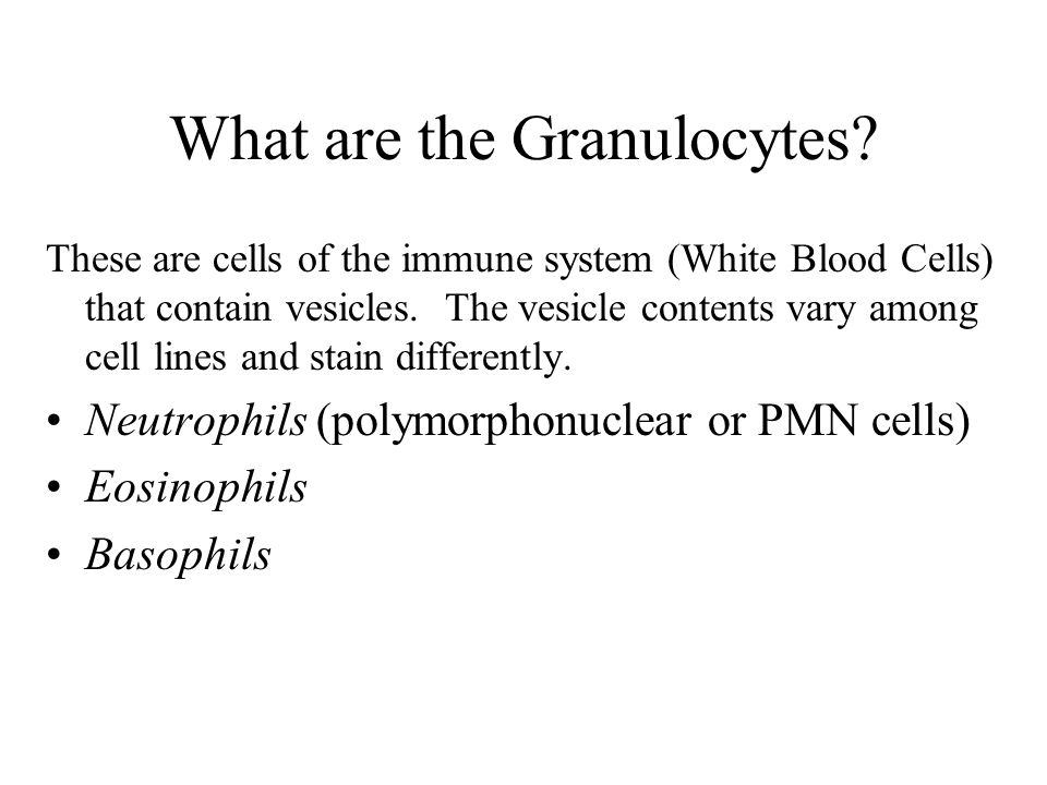 What are the Granulocytes? These are cells of the immune system (White Blood Cells) that contain vesicles. The vesicle contents vary among cell lines
