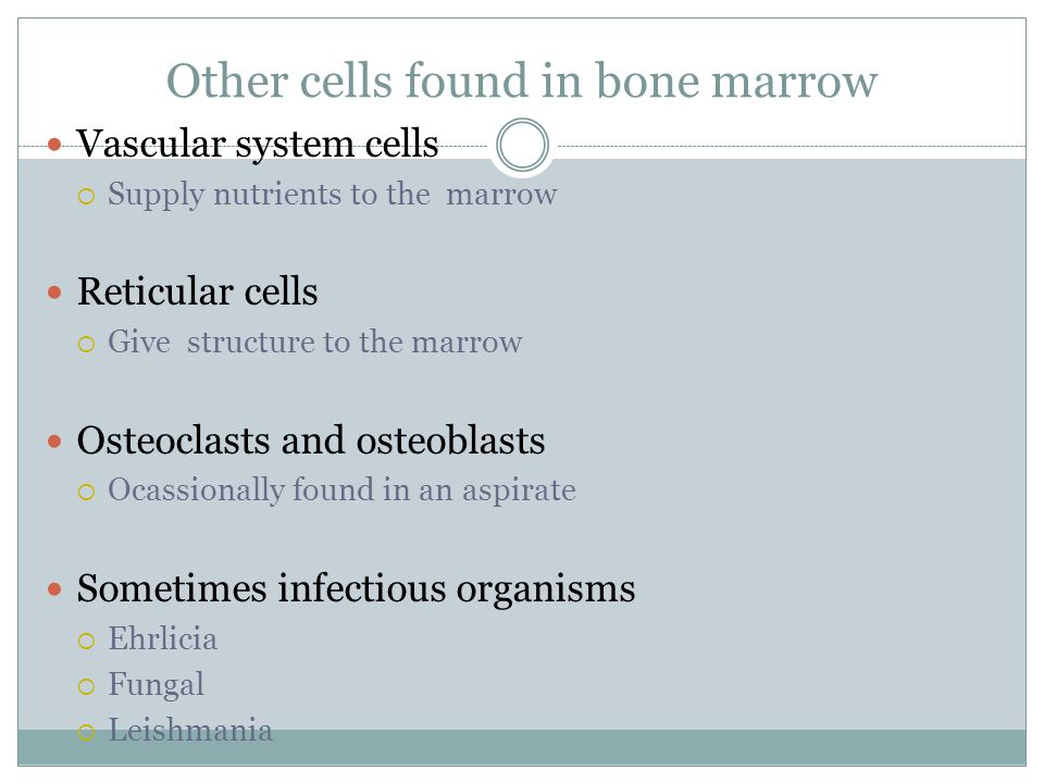 Other cells found in bone marrow Vascular system cells  Supply nutrients to the marrow Reticular cells  Give structure to the marrow Osteoclasts and osteoblasts  Ocassionally found in an aspirate Sometimes infectious organisms  Ehrlicia  Fungal  Leishmania