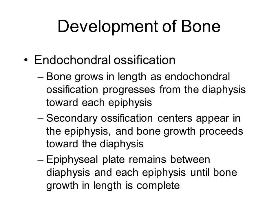 Development of Bone Endochondral ossification –Bone grows in length as endochondral ossification progresses from the diaphysis toward each epiphysis –Secondary ossification centers appear in the epiphysis, and bone growth proceeds toward the diaphysis –Epiphyseal plate remains between diaphysis and each epiphysis until bone growth in length is complete