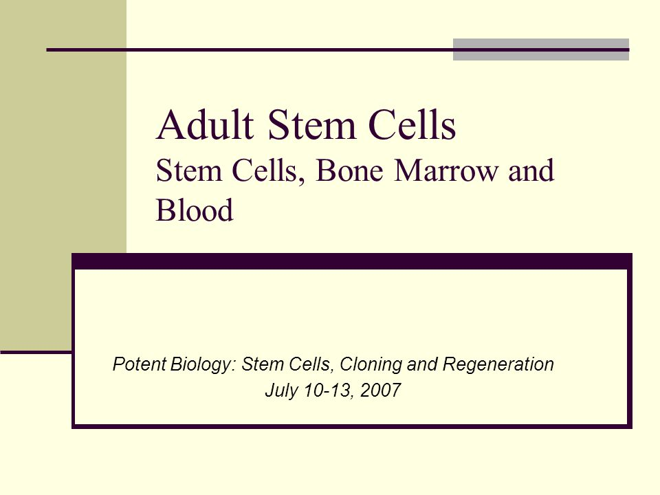 Stem Cells Embryonic – undifferentiated cells from the embryo that have the potential to become a wide variety of specialized cell types Zygote (totipotent) Morula (totipotent- pluripotent) Blastocyst (pluripotent) Inner Cell Mass (ICM) (pluripotent) Gastrula (multipotent)