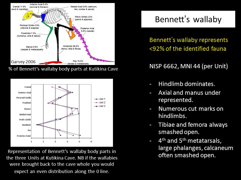 Bennett ' s wallaby represents <92% of the identified fauna NISP 6662, MNI 44 (per Unit) -Hindlimb dominates. -Axial and manus under represented. -Num
