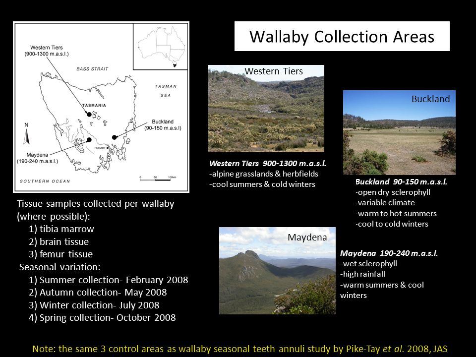 Wallaby Collection Areas Buckland 90-150 m.a.s.l. -open dry sclerophyll -variable climate -warm to hot summers -cool to cold winters Maydena 190-240 m