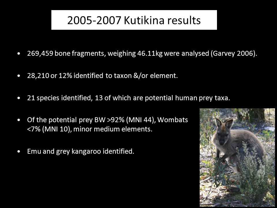 269,459 bone fragments, weighing 46.11kg were analysed (Garvey 2006). 28,210 or 12% identified to taxon &/or element. 21 species identified, 13 of whi