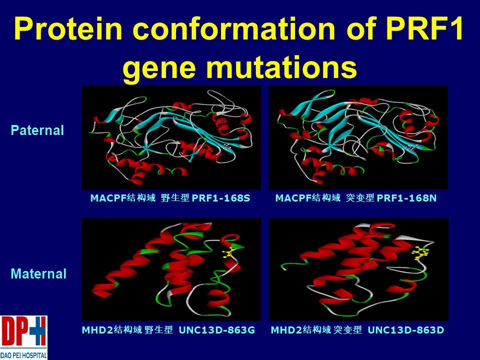MACPF 结构域 野生型 PRF1-168SMACPF 结构域 突变型 PRF1-168N MHD2 结构域 野生型 UNC13D-863GMHD2 结构域 突变型 UNC13D-863D Protein conformation of PRF1 gene mutations Paternal Maternal