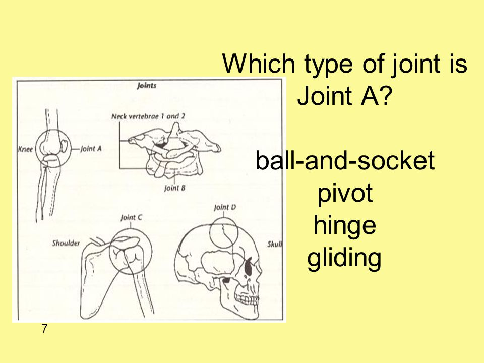 Which type of joint is Joint A? ball-and-socket pivot hinge gliding 7