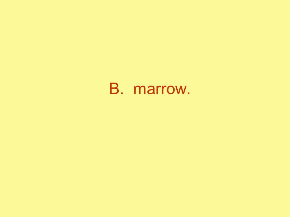 B. marrow.