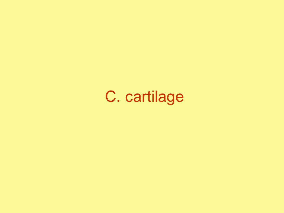 C. cartilage