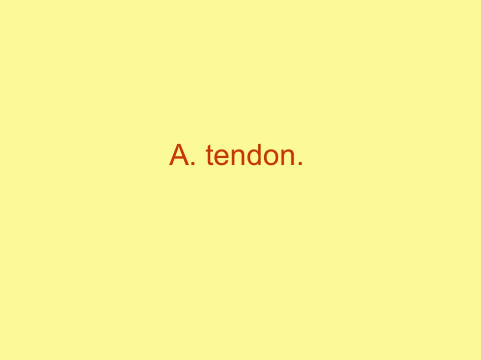 A. tendon.