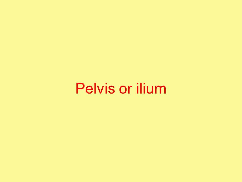 Pelvis or ilium