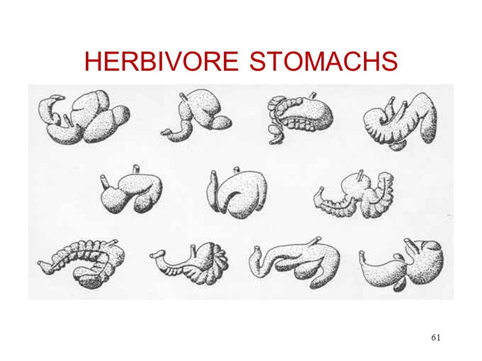 HERBIVORE STOMACHS 61