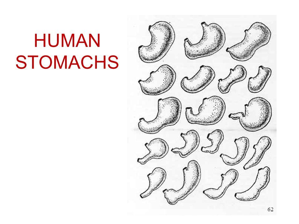 HUMAN STOMACHS 62