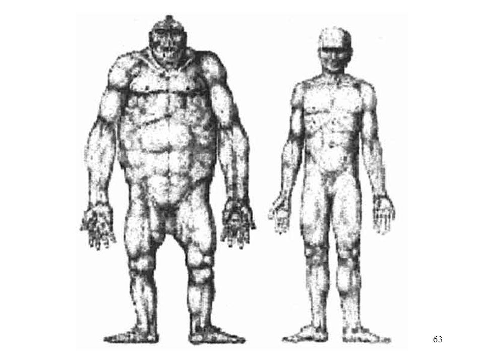 Gorilla and Man 63