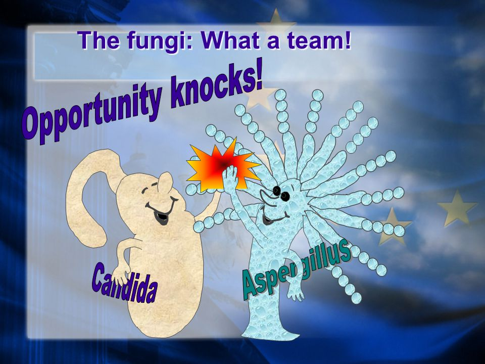 The fungi: What a team!