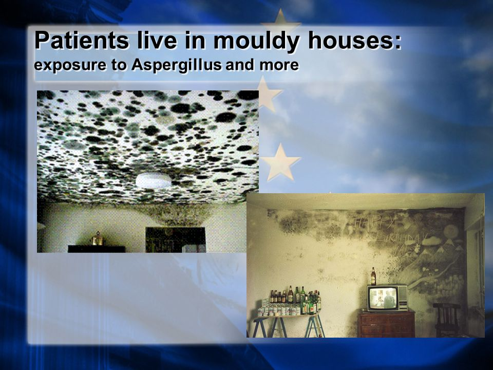 Patients live in mouldy houses: exposure to Aspergillus and more