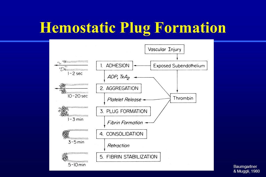 Hemostatic Plug Formation Baumgartner & Muggli, 1980
