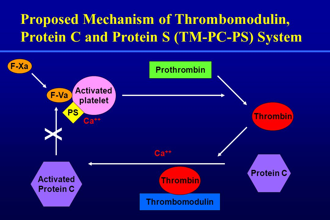 Proposed Mechanism of Thrombomodulin, Protein C and Protein S (TM-PC-PS) System Thrombin Prothrombin Protein C Thrombomodulin Thrombin F-Xa Activated