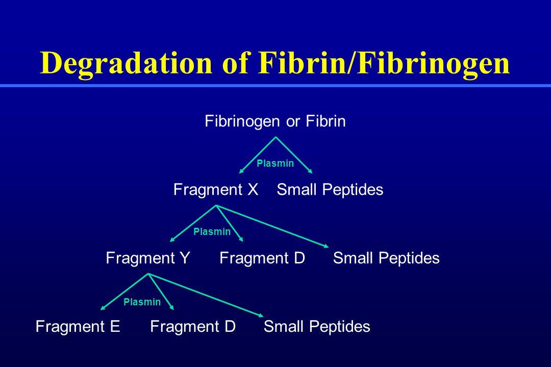 Degradation of Fibrin/Fibrinogen Fibrinogen or Fibrin Fragment XSmall Peptides Fragment YFragment DSmall Peptides Fragment EFragment DSmall Peptides Plasmin