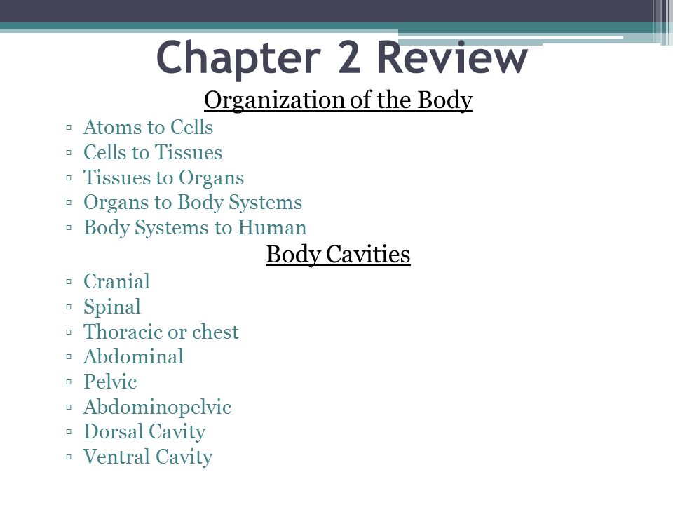 Chapter 2 Review Organization of the Body ▫Atoms to Cells ▫Cells to Tissues ▫Tissues to Organs ▫Organs to Body Systems ▫Body Systems to Human Body Cavities ▫Cranial ▫Spinal ▫Thoracic or chest ▫Abdominal ▫Pelvic ▫Abdominopelvic ▫Dorsal Cavity ▫Ventral Cavity