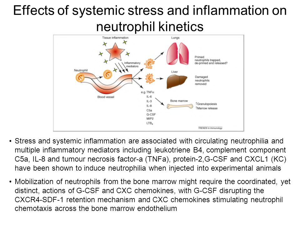Effects of systemic stress and inflammation on neutrophil kinetics Stress and systemic inflammation are associated with circulating neutrophilia and multiple inflammatory mediators including leukotriene B4, complement component C5a, IL-8 and tumour necrosis factor-a (TNFa), protein-2,G-CSF and CXCL1 (KC) have been shown to induce neutrophilia when injected into experimental animals Mobilization of neutrophils from the bone marrow might require the coordinated, yet distinct, actions of G-CSF and CXC chemokines, with G-CSF disrupting the CXCR4-SDF-1 retention mechanism and CXC chemokines stimulating neutrophil chemotaxis across the bone marrow endothelium