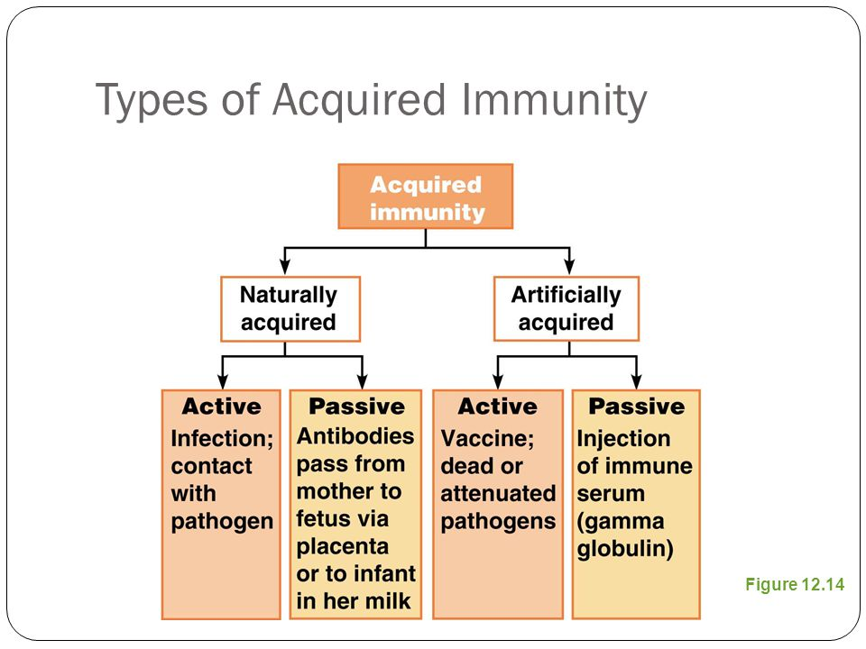 Types of Acquired Immunity Figure 12.14