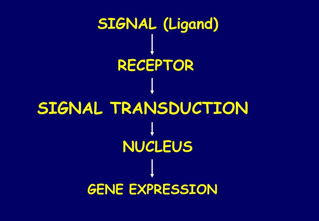 SIGNAL (Ligand) RECEPTOR SIGNAL TRANSDUCTION NUCLEUS GENE EXPRESSION