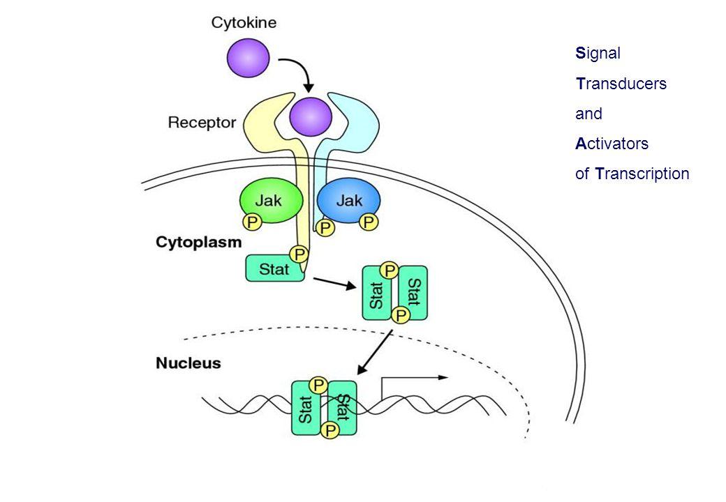 Signal Transducers and Activators of Transcription