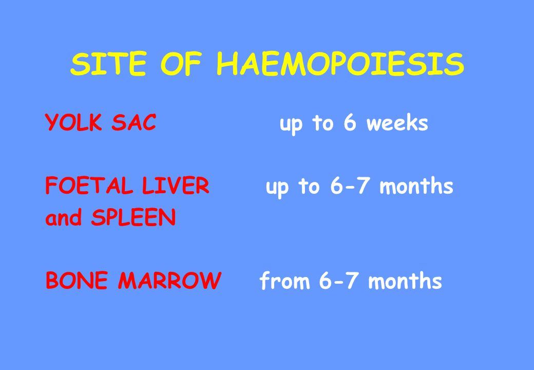 SITE OF HAEMOPOIESIS YOLK SAC up to 6 weeks FOETAL LIVER up to 6-7 months and SPLEEN BONE MARROW from 6-7 months