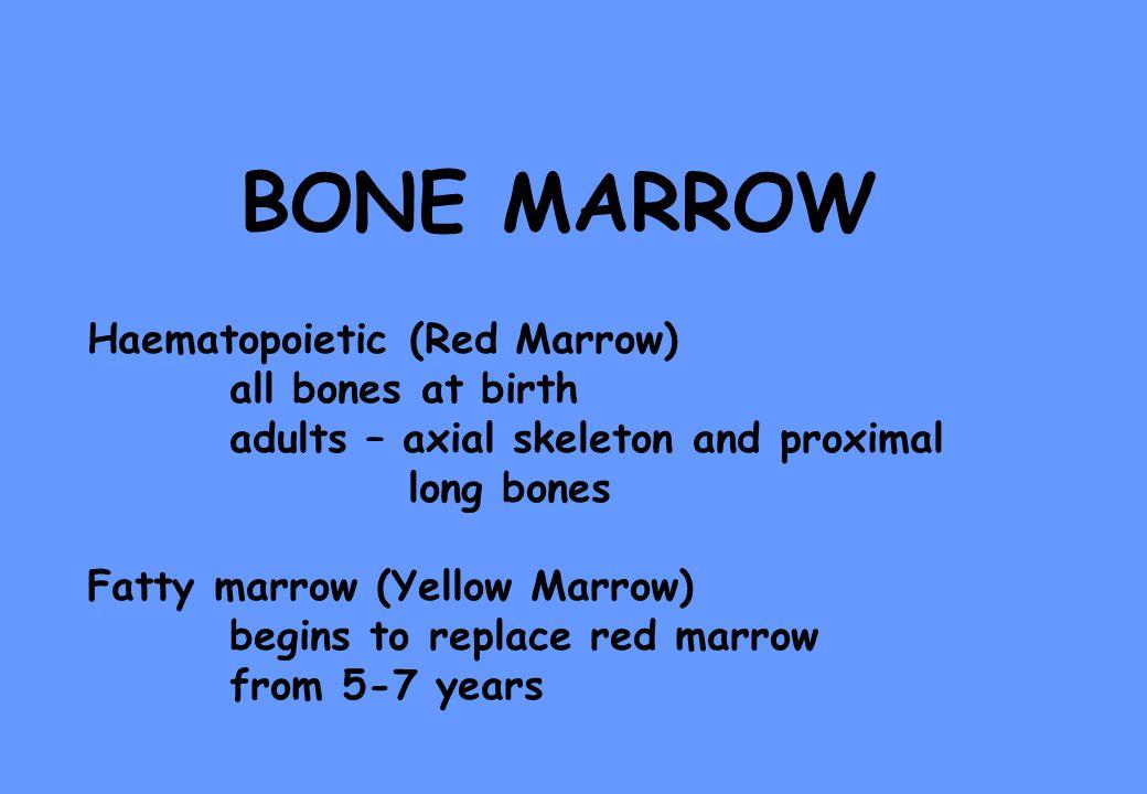 BONE MARROW Haematopoietic (Red Marrow) all bones at birth adults – axial skeleton and proximal long bones Fatty marrow (Yellow Marrow) begins to repl