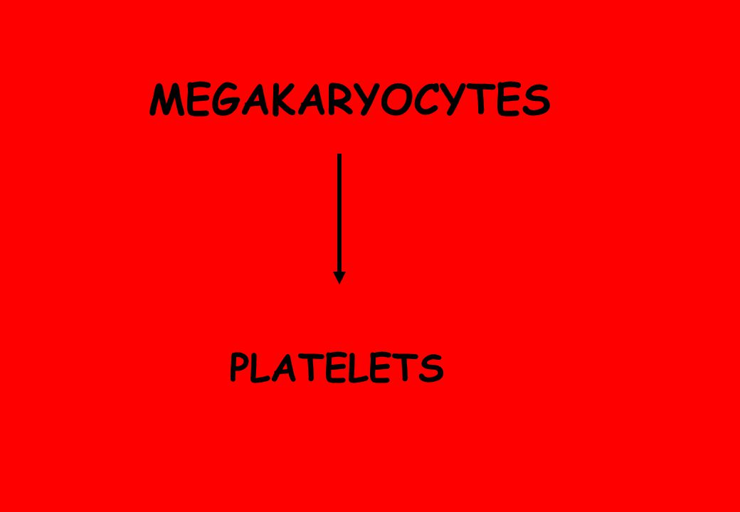MEGAKARYOCYTES PLATELETS