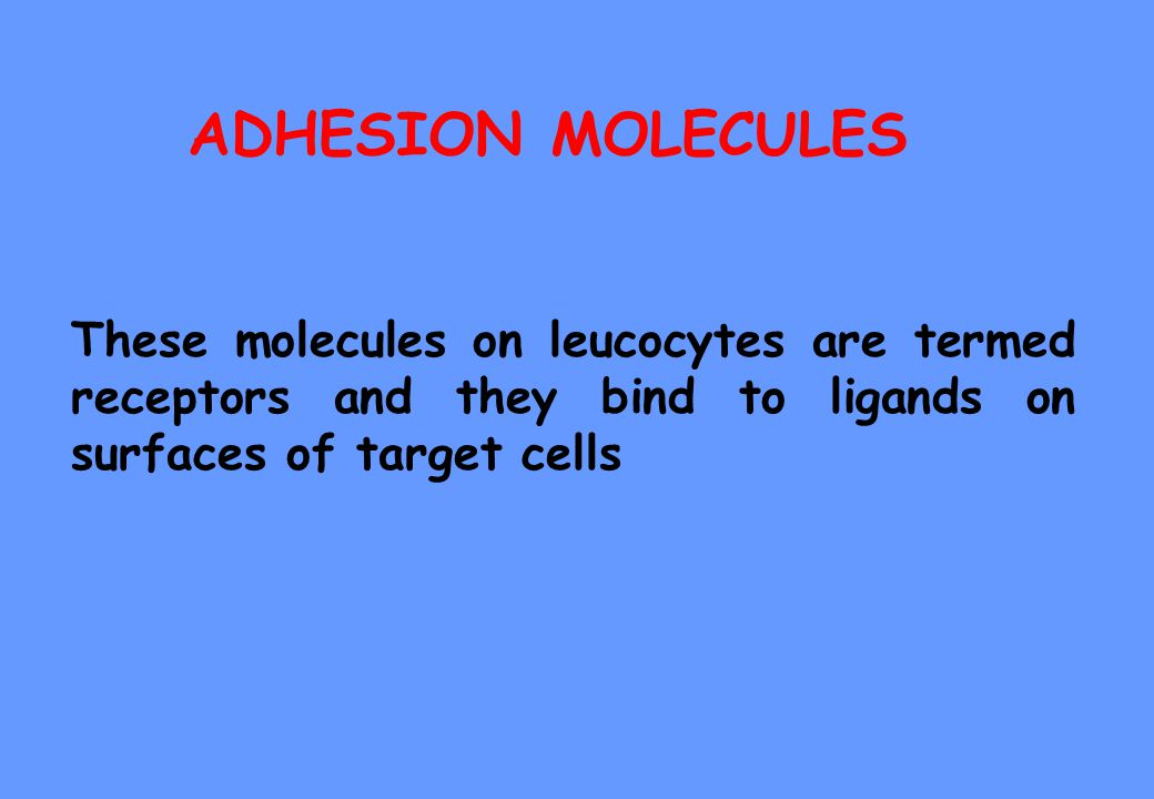 ADHESION MOLECULES These molecules on leucocytes are termed receptors and they bind to ligands on surfaces of target cells