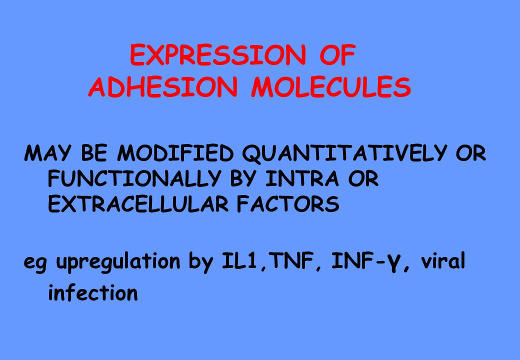 EXPRESSION OF ADHESION MOLECULES MAY BE MODIFIED QUANTITATIVELY OR FUNCTIONALLY BY INTRA OR EXTRACELLULAR FACTORS eg upregulation by IL1,TNF, INF- γ,
