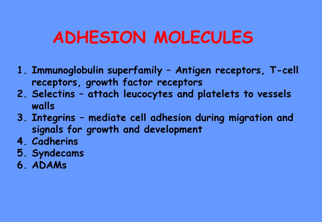 ADHESION MOLECULES 1.Immunoglobulin superfamily – Antigen receptors, T-cell receptors, growth factor receptors 2.Selectins – attach leucocytes and platelets to vessels walls 3.Integrins – mediate cell adhesion during migration and signals for growth and development 4.Cadherins 5.Syndecams 6.ADAMs