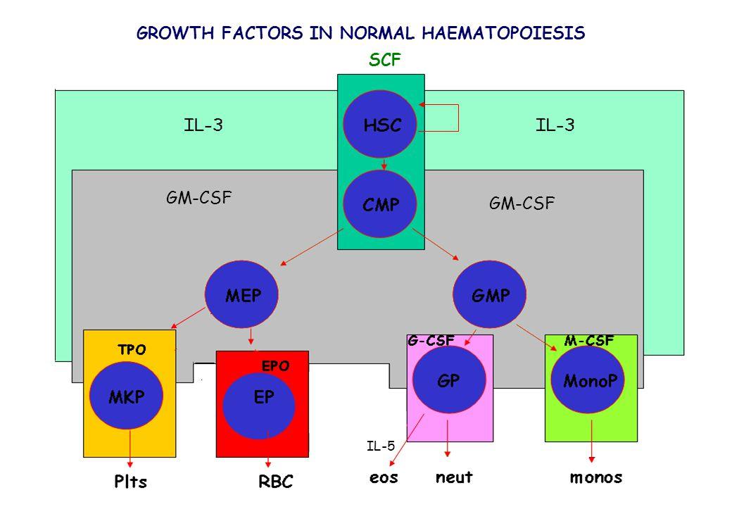 GROWTH FACTORS IN NORMAL HAEMATOPOIESIS IL-5 SCF GM-CSF